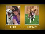 Pooch Selfie: The Smartphone Attachment
