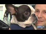 Pilot leitet Flug um, um das Leben eines Hundes zu retten