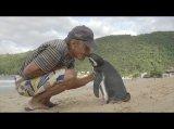 Pinguin schwimmt jedes Jahr 8000 Kilometer -Video
