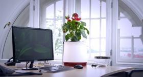 AIRY: Hochwirksame Luftreinigung durch Pflanzen