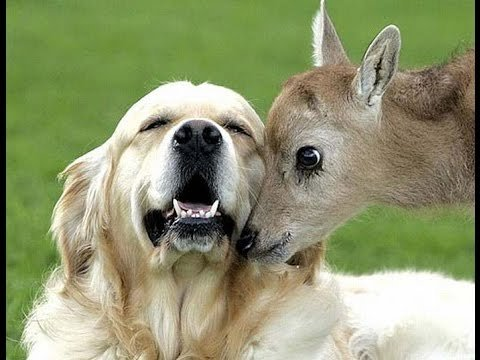 Unbelievable Unlikely Animal Friendships Compilation [HD VIDEO]