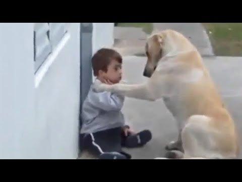 Hund kümmert sich liebevoll um kleinen Jungen mit Down-Syndrom