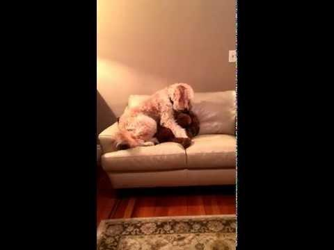 Dog Comforts Pal Having Bad Dream