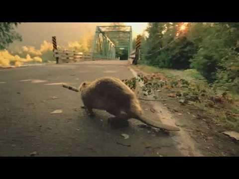 Bridgestone - Beaver-Super Bowl Commercial