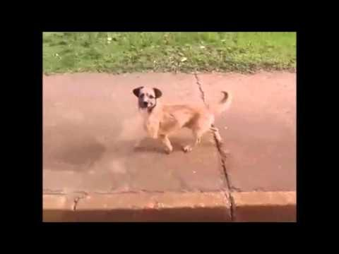 Cachorro persegue ambulância em Taguatinga
